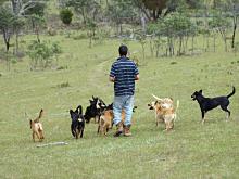 farthings-lane-farm-dogs.jpg